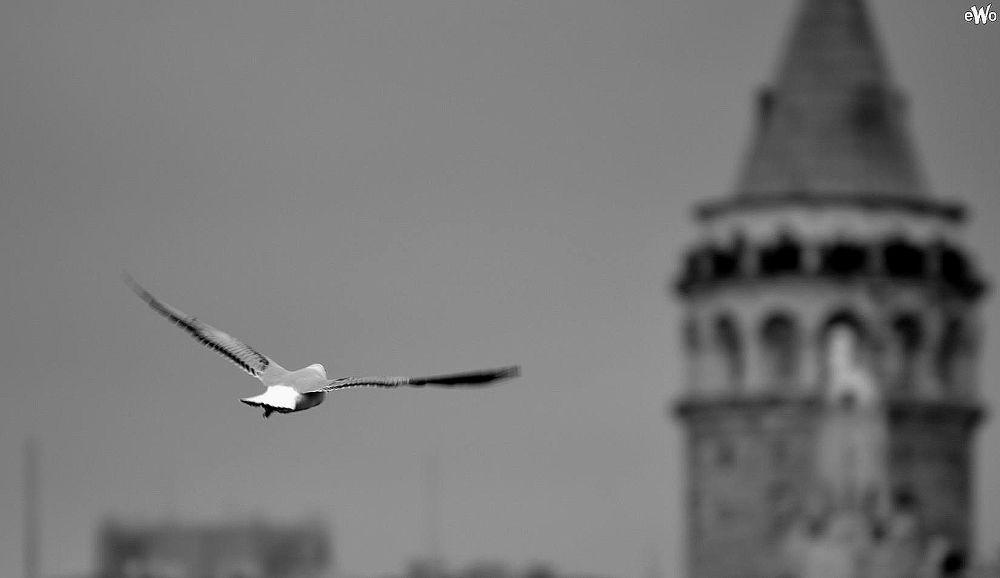 Photo in Random #galata tower #seagull