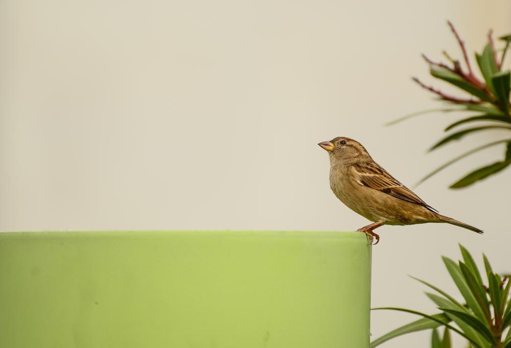 Photo in Animal #bird #istanbul #turkey