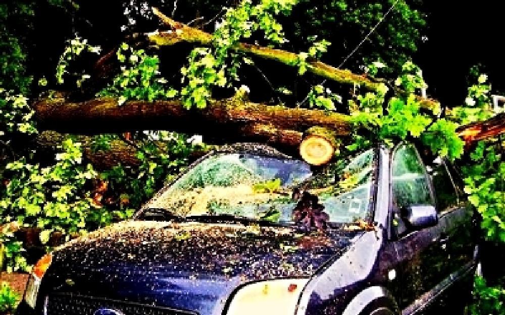Photo in Nature #car #crash #tree #storm #boom #auto #voiture