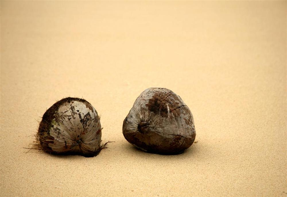 Photo in Landscape #travelling together #coconuts #beach in oahu hawaii #fine sand #beached