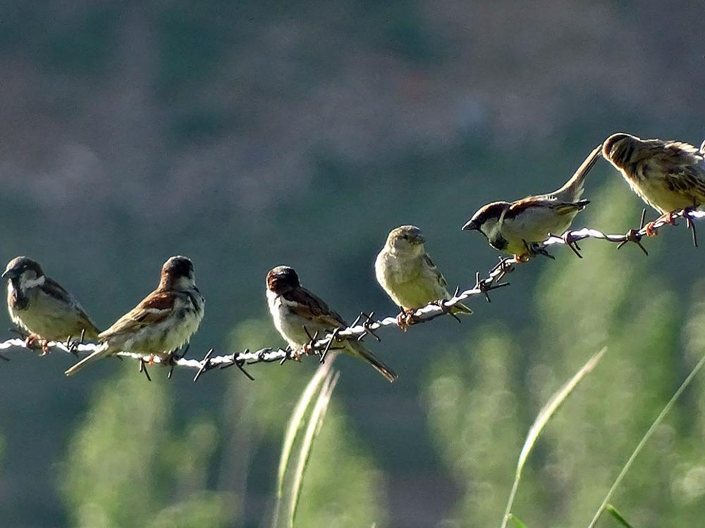 Photo in Animal #animal #bird #sparrow #passer