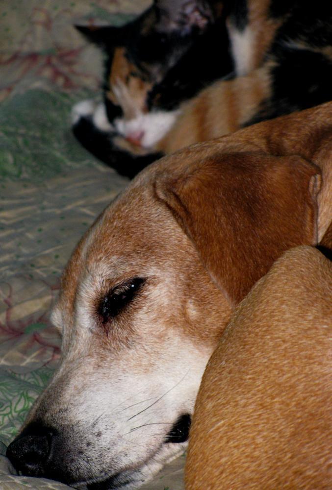 Photo in Animal #dog #cat #friends #sleeping #animal