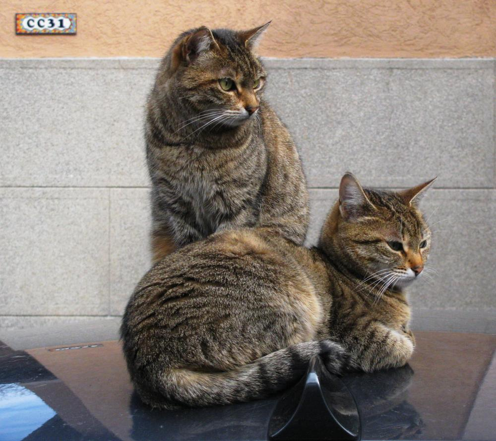 Photo in Animal #two #cats #car #roof #animal #feline