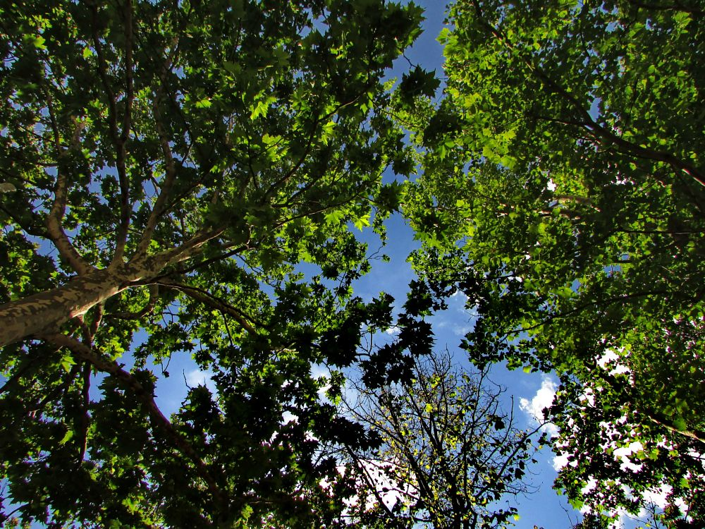 Photo in Nature #trees #sky #nature #forest
