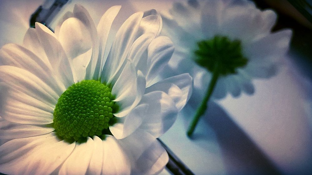 Photo in Nature #flower #reflection #mirror #plant #nature #colourful #vivid #beautiful #green #vibrant #bold #floral