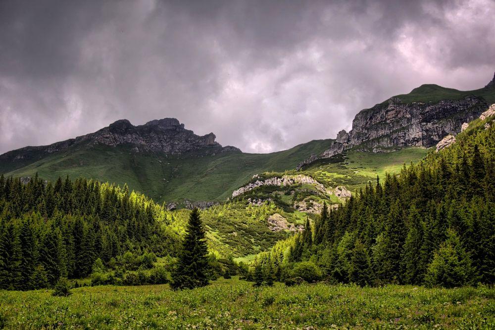 Photo in Landscape #tatry #dolina #góry #lato #las #trawa