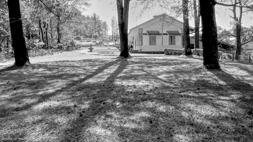 Photo in Black and White #shadow #trees #landscape #villa #black and white #village