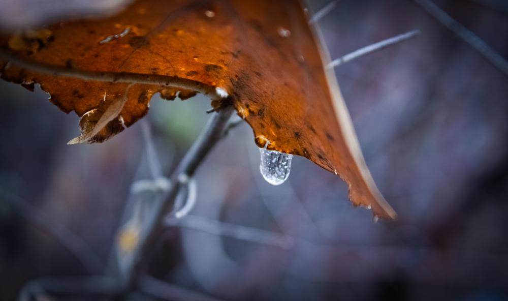 Photo in Nature #leaf #macro #nature