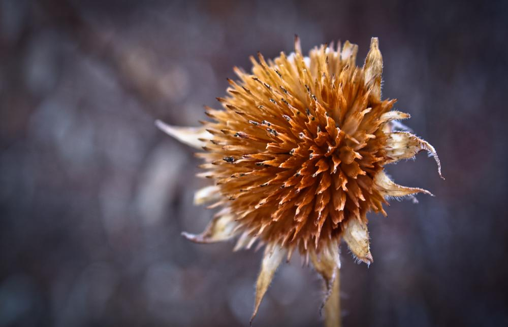 Photo in Nature #flower #winter #nature