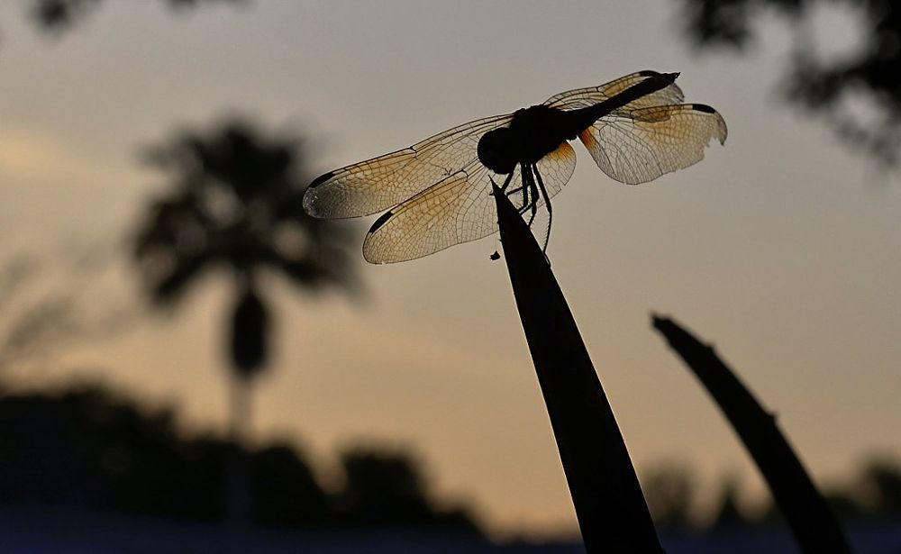 Photo in Nature #dragonfly #insect #wings