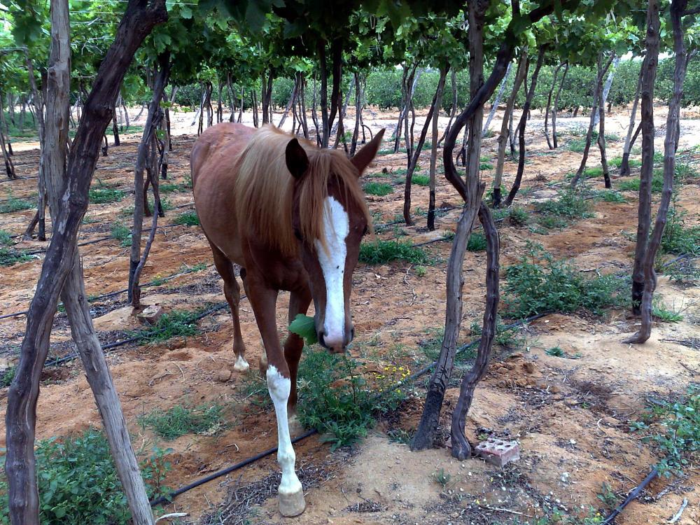 Photo in Animal #horse