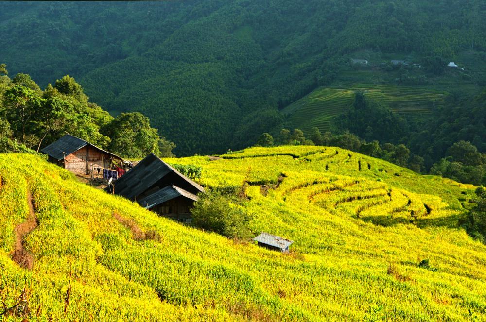 Photo in Landscape #sunny #versant #mountain slop #rice fields #houses #village #moutain #landscape #nature #travel #places