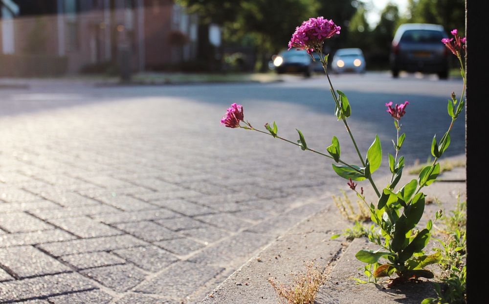 Photo in Street Photography #cars #flowers #sidewalk #street #traffic