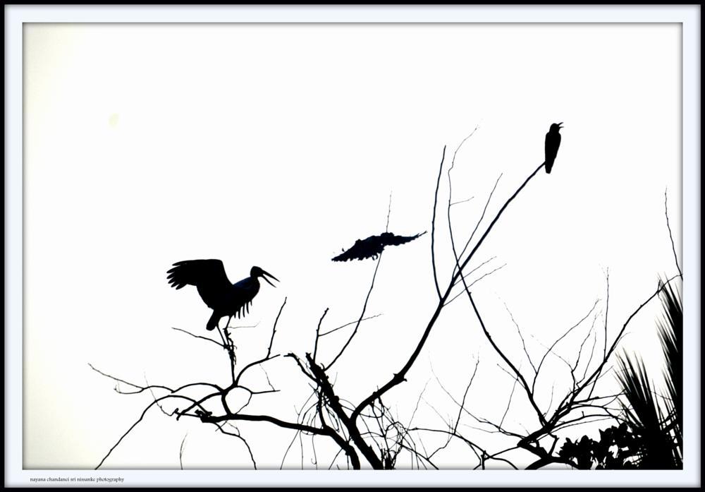 Photo in Black and White #balckandwhitenayanachandaneis