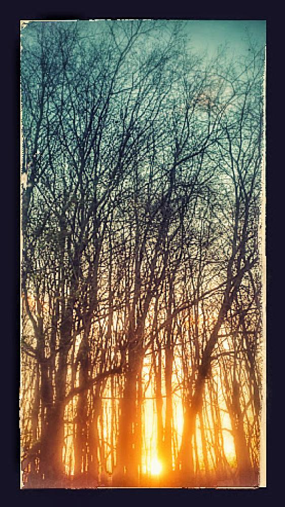 Photo in Rural #woods #sunset #trees
