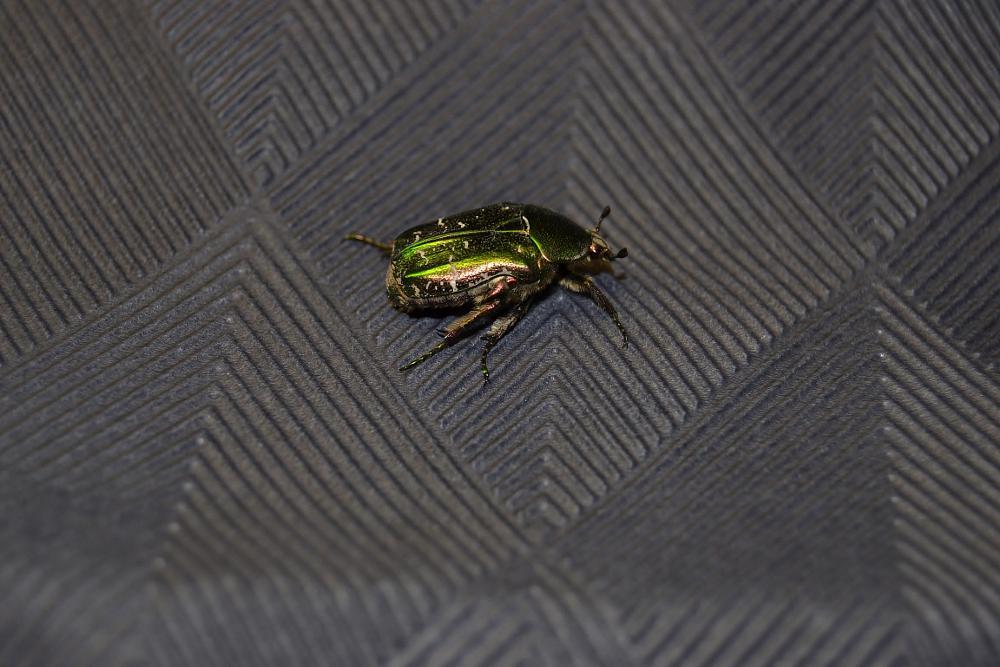 Photo in Random #bug #insekt