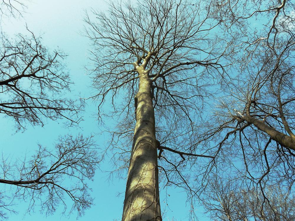 Photo in Nature #tree #sky #spring #sunshine