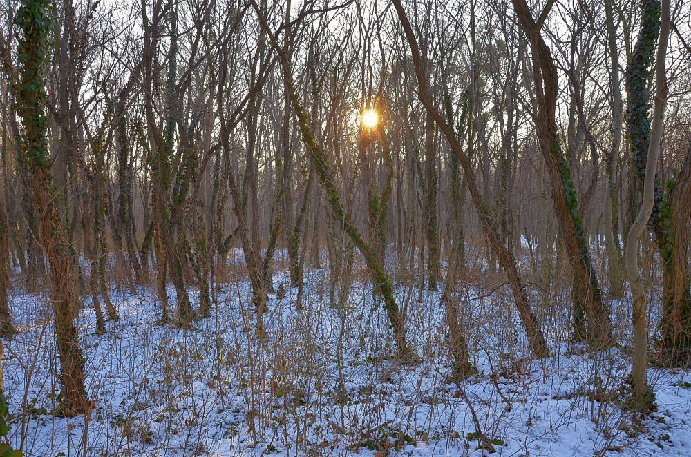 Photo in Nature #calmness #frost #day #freezy #sun #trees #wood #winter #cold #walk #serenity #snow