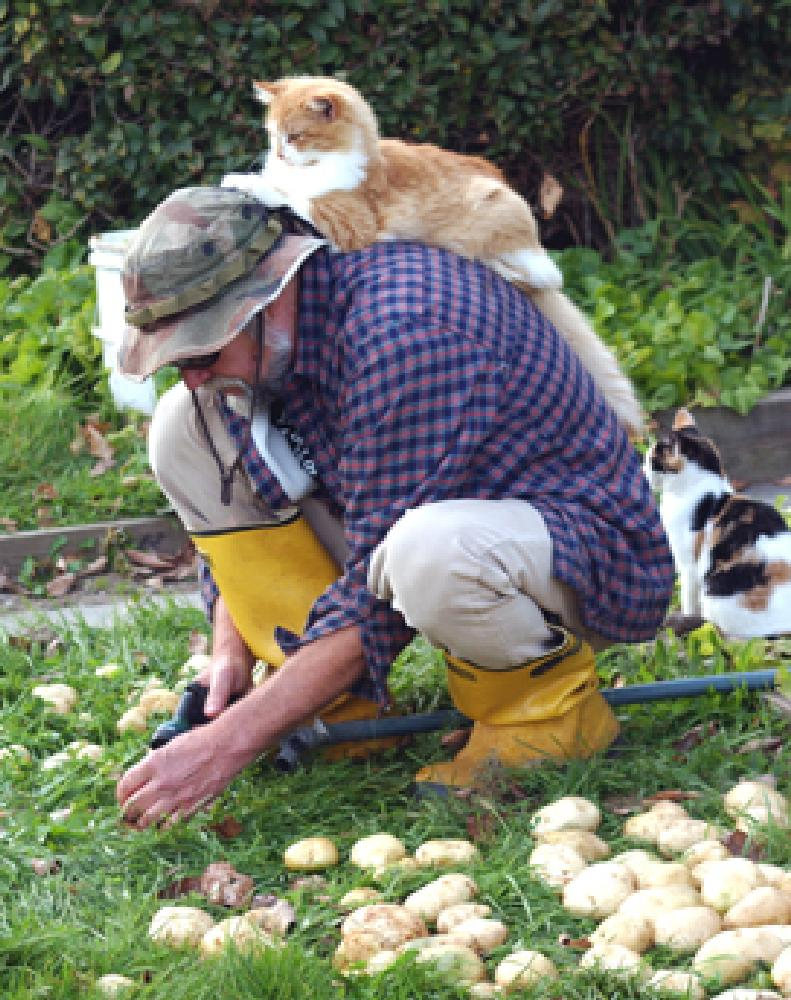 Photo in People #farmer #cats