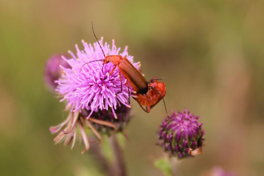 Photo in Animal #love #insect #animal #nature #canon #uk #bognor regis