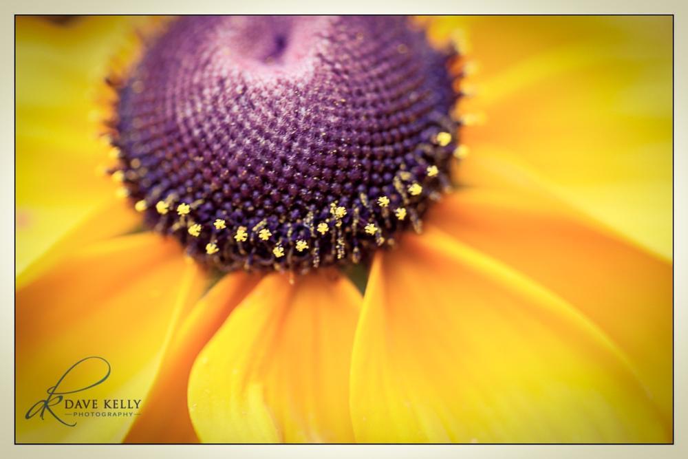 Photo in Nature #flower #flora #macro #nature #yellow #purple