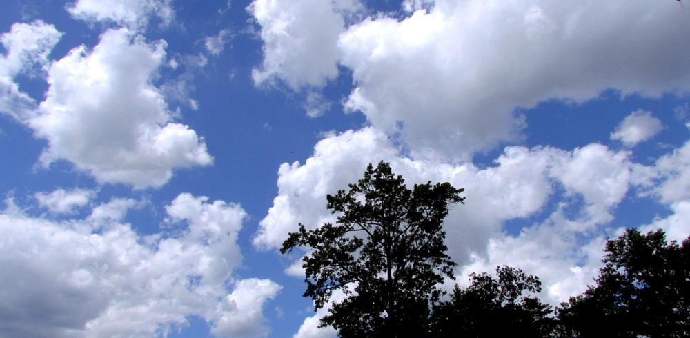 Photo in Nature #nature #clouds #tree