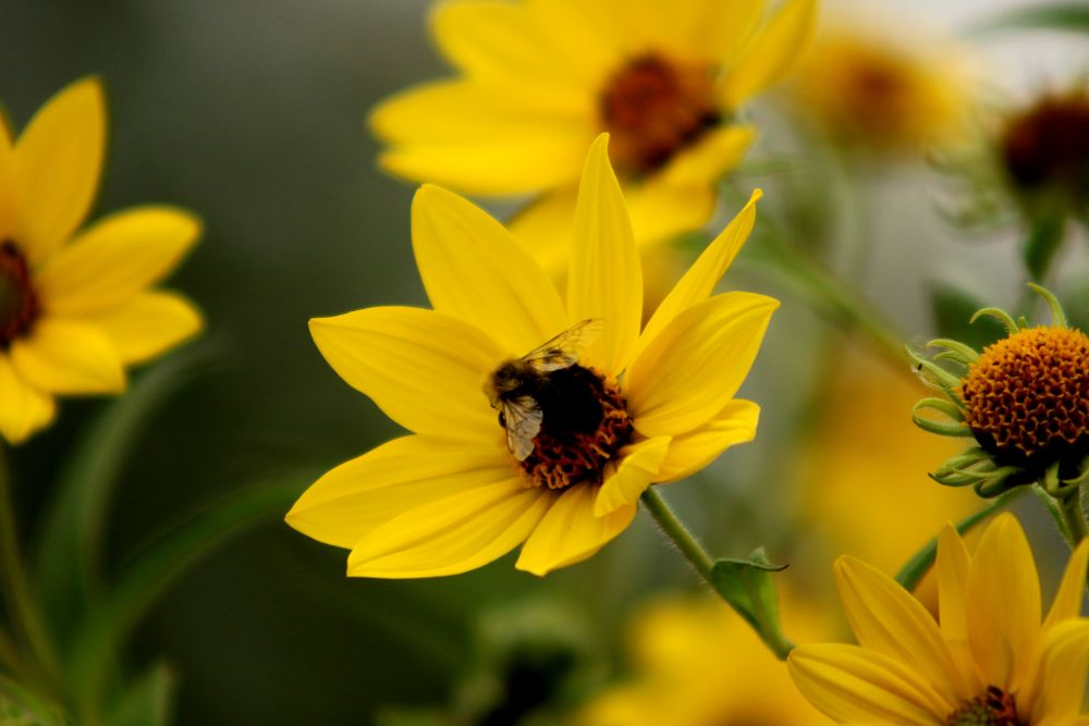 Photo in Nature #bee #close-up #flowers