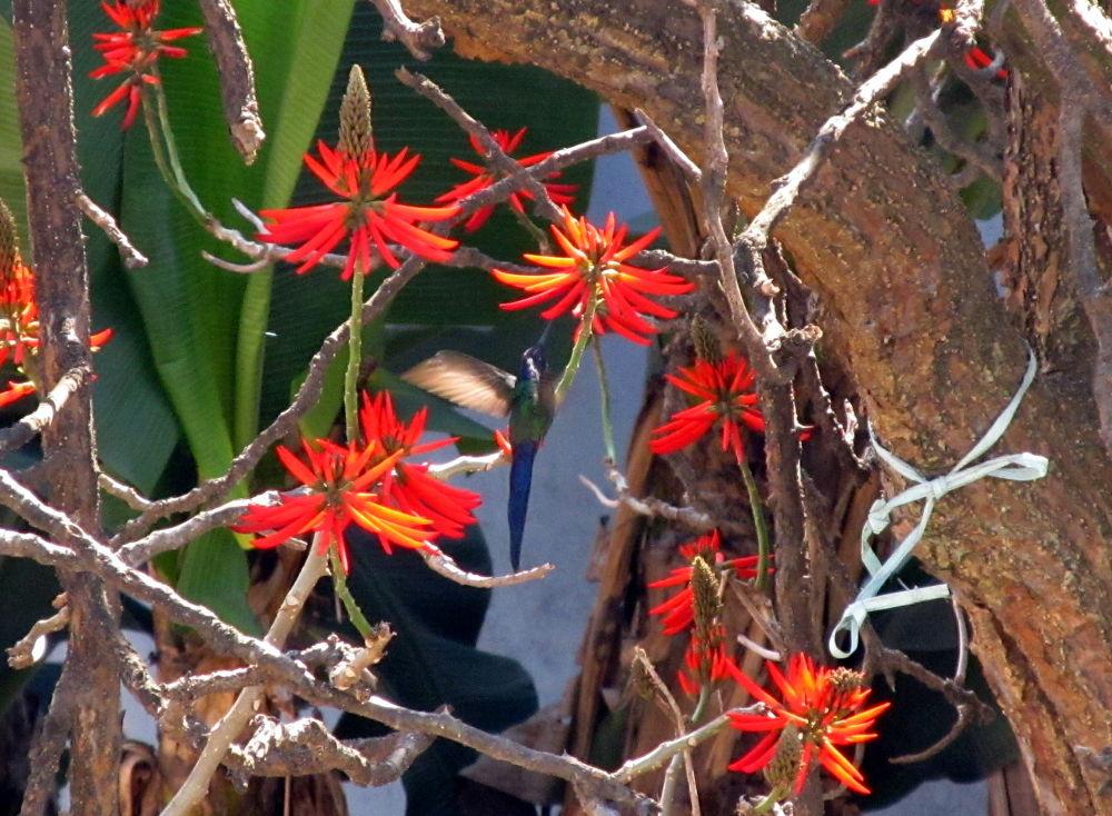 Photo in Nature #hamingbird