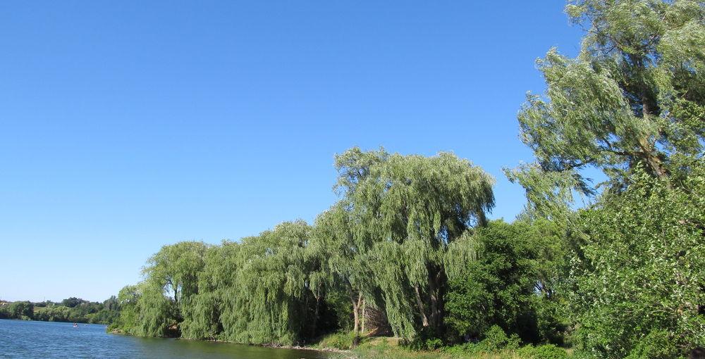 Photo in Random #blue #sky #green #trees #water #lake