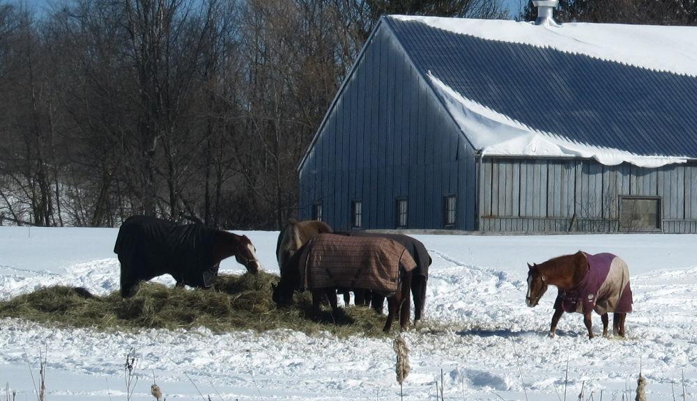Photo in Animal #horses #snow #hay #barn