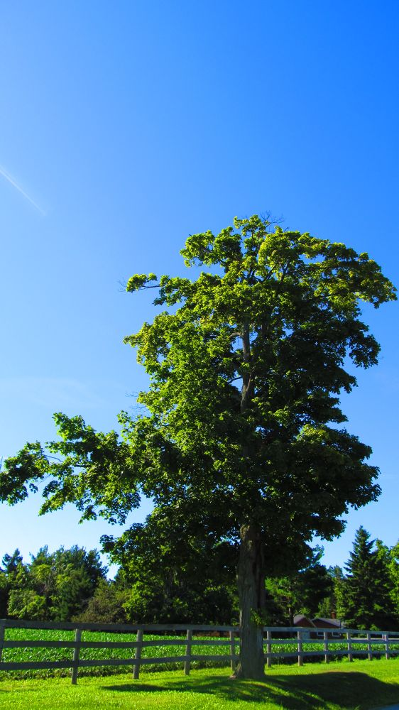 Photo in Nude #tree #blue sky #fence #field #grass
