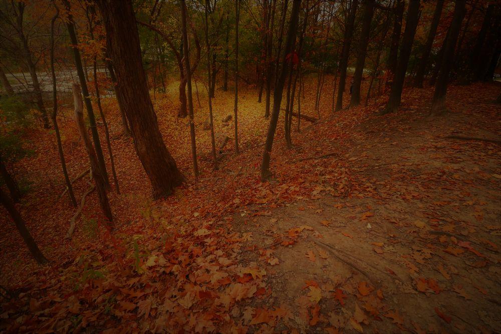Photo in Nature #season #autumn