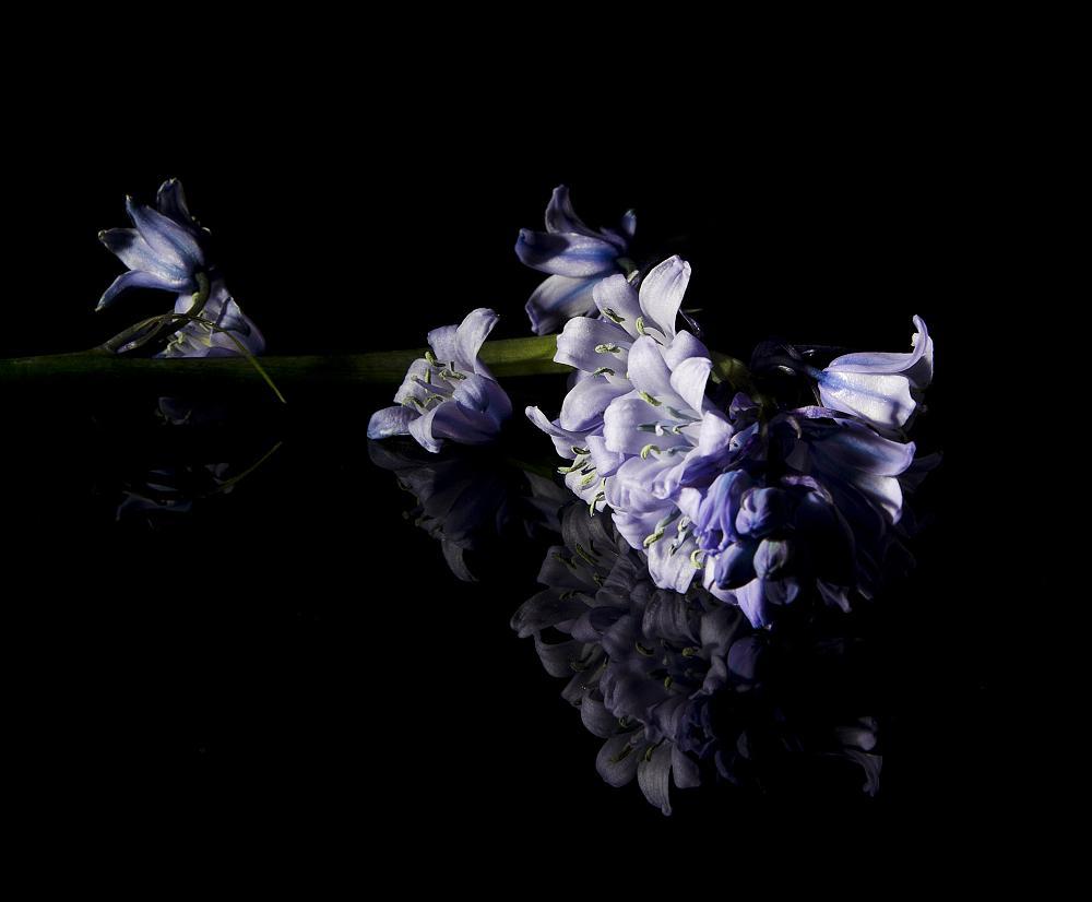 Photo in Still Life #flowers #bluebells #purple #flash #lighting