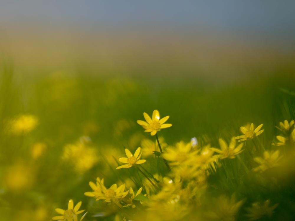 Photo in Nature #yellow #spring #colors