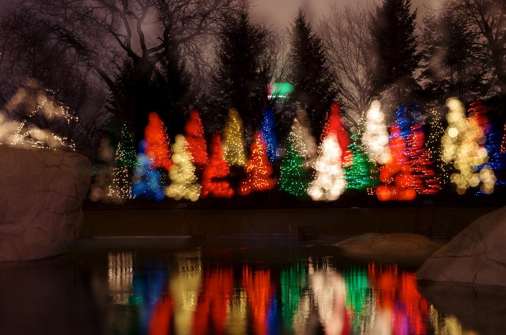Photo in Cityscape #christmas tree #christmas lights #lights #long exposure