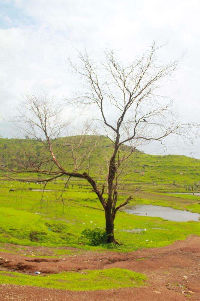 Photo in Nature #hemant singh negi photography