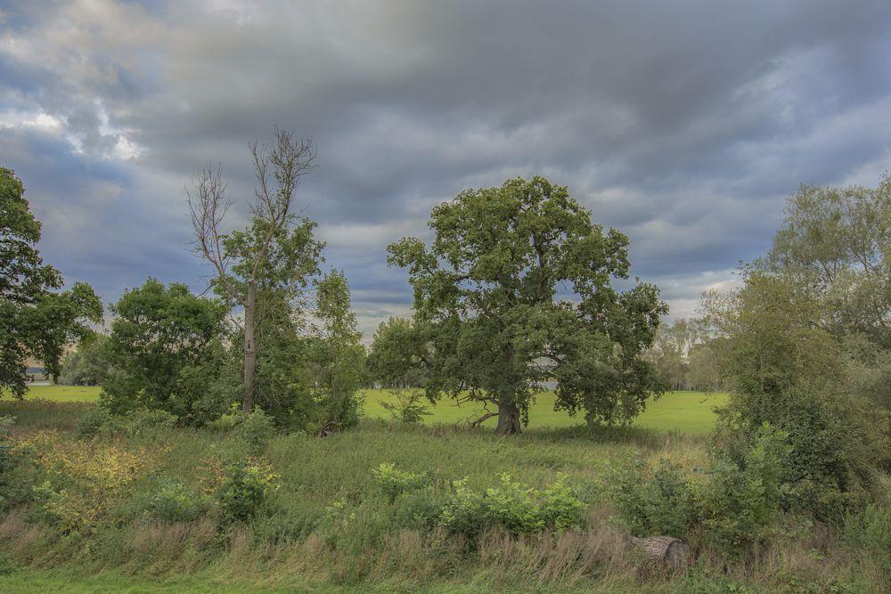 Photo in Nature #nature #landscape #oak #tree #meadows #clouds #river #elbe #elbtalauen #elbhöhen-wendland #germany #2015