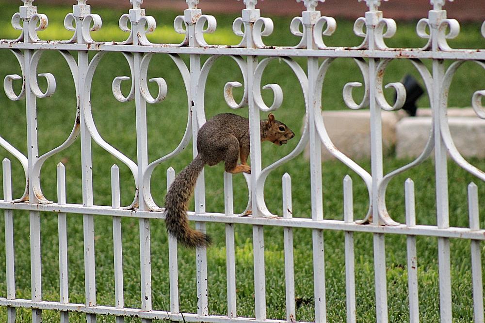 Photo in Random #squirrel #animal #cute