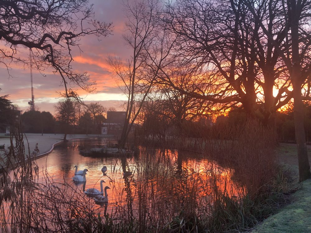 Photo in Landscape #sunrise #water #red #gold #park #swan