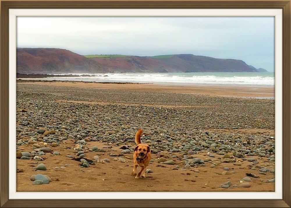Photo in Sea and Sand #dog #beach #waves #sea