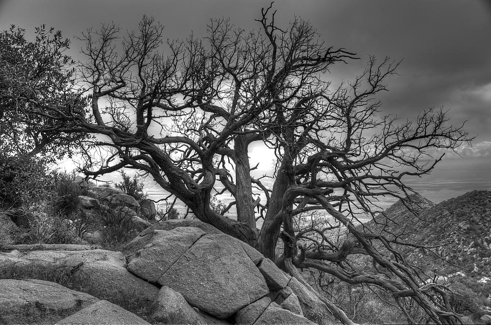Photo in Nature #organ mountains #juniper