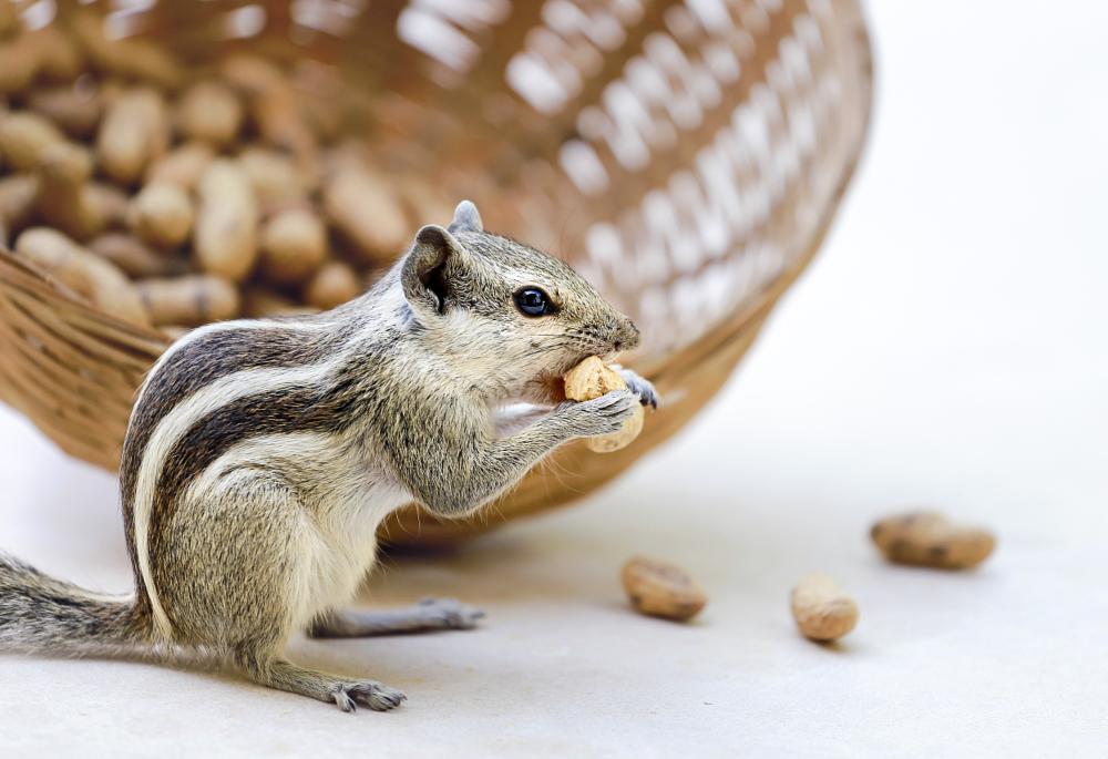 Photo in Animal #squirrel #india #animals #nature