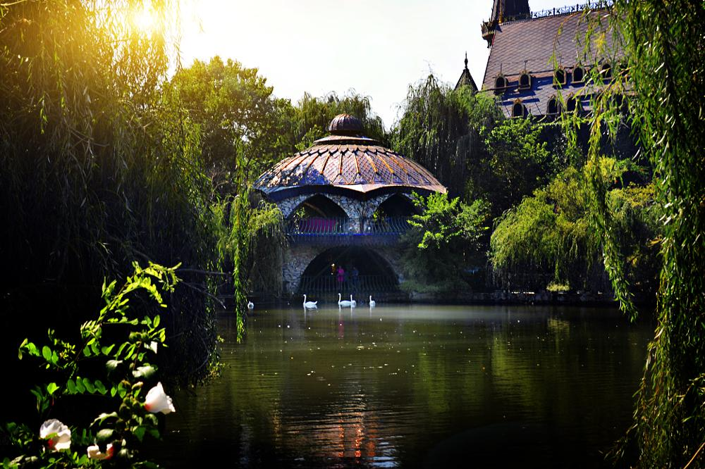Photo in Random #magic in the air swans lake