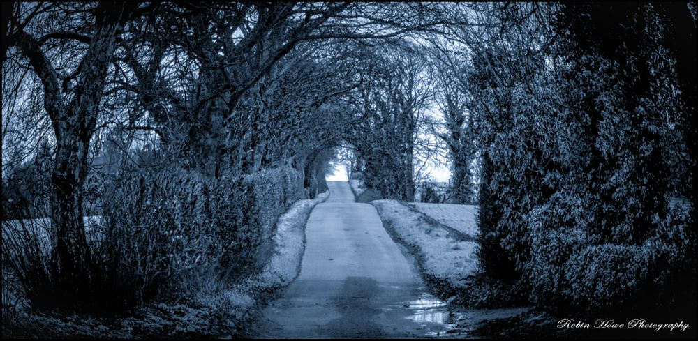 Photo in Landscape #winter #snow #lane #trees #barnetby #lincolnshire #cold