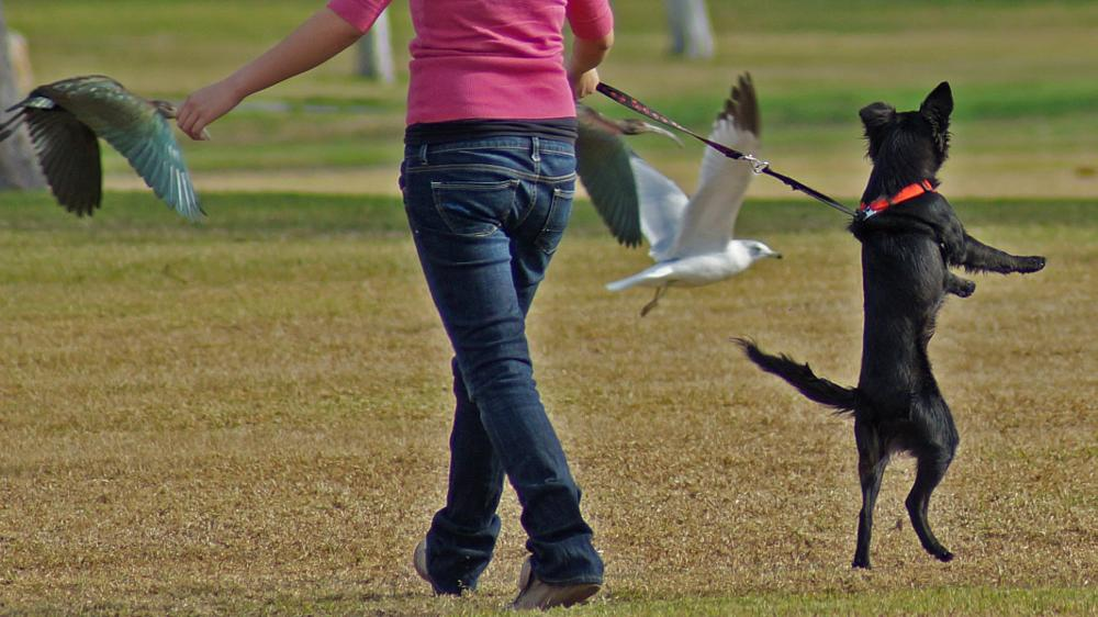 Photo in Animal #dog #doggy #pup #puppy #chasing birds #park