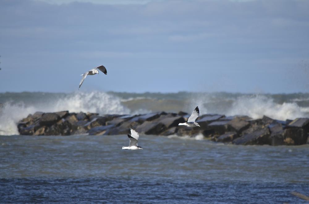 Photo in Landscape #birds #breakwater #landscape