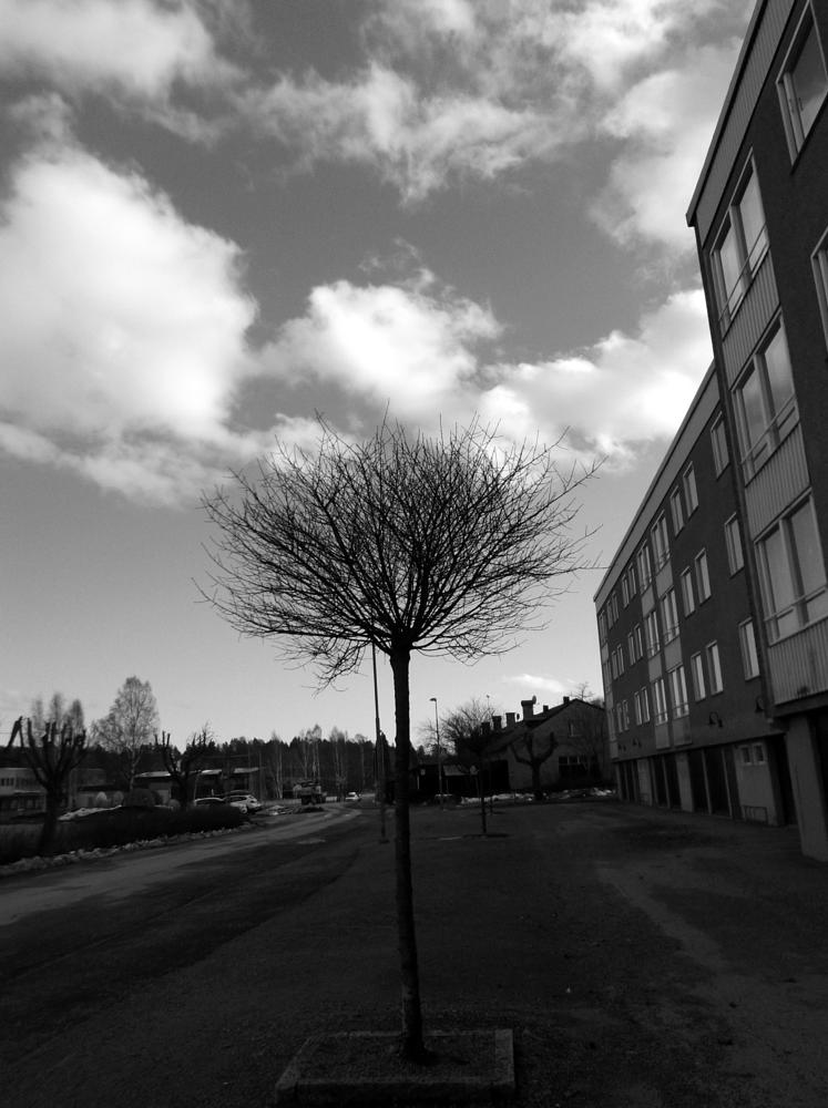 Photo in Black and White #tree #sky #clouds #black and white #b&w #monochrome #road