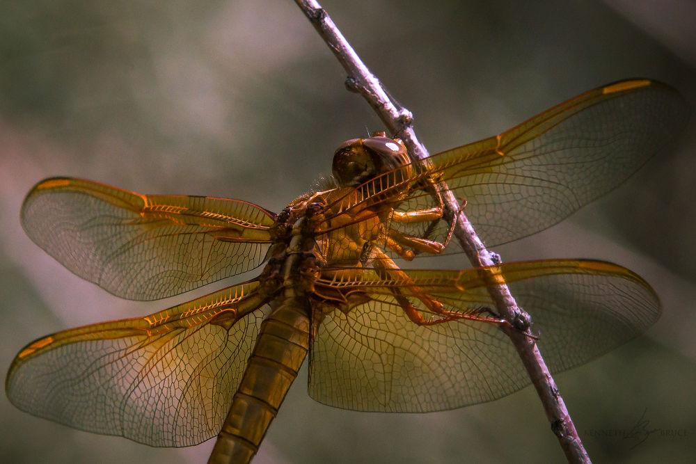 Photo in Macro #dragonflt #macro #insect
