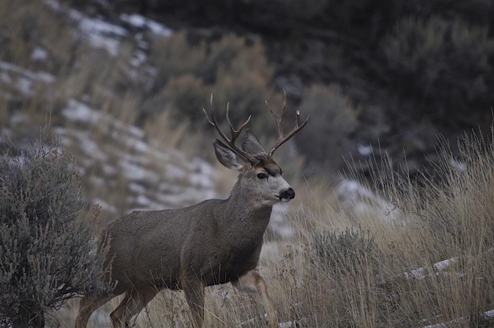 Photo in Random #montana