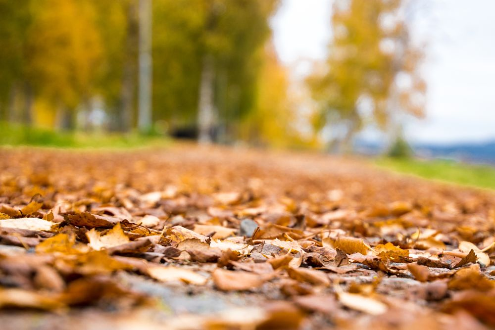 Photo in Landscape #leaves #ground #trees #bokeh